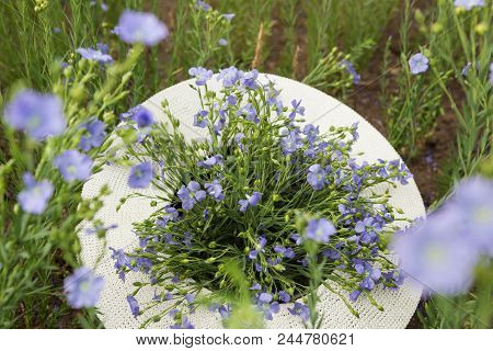 In A Flaxen Hat A Bouquet Of Flowering Flax Plants, A Hat Lies In The Field Of Flowering Flax, Agric