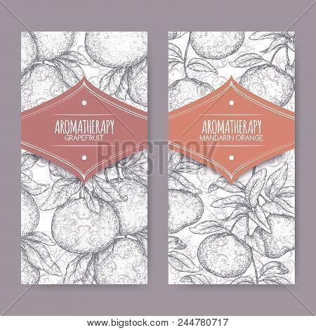 Two Labels With Citrus Paradisi Aka Grapefruit And Citrus Reticulata Aka Mandarin Sketch On Elegant