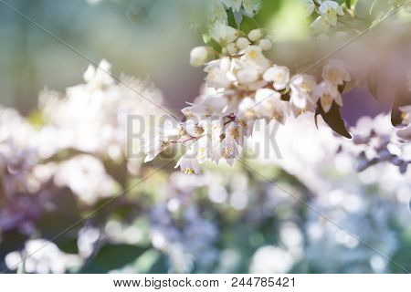 Summer White Flowers Bloom. Meadowsweet. Branch White Flowers. White Buds. White Flowers Blurred Bac
