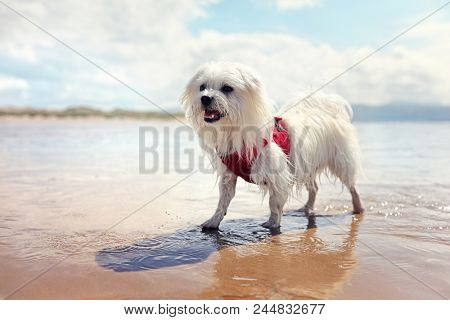 Happy dog playing fetch in the sea on the beach