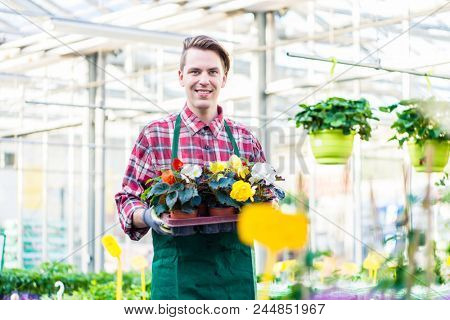 Portrait of a handsome young man holding a tray with potted ornamental flowers while working as florist in a modern flower shop