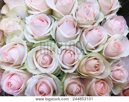 Set of bouquet rose