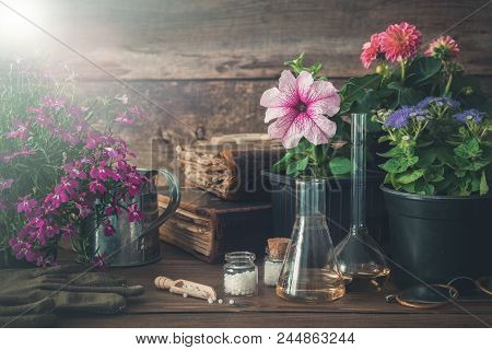 Seedling Of Garden Plants And Flowers, Old Books And Homeopathic Remedies For Plants. Natural Altern
