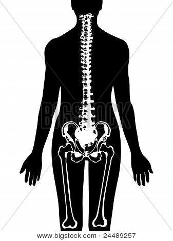 Spine & pelvis icon vector
