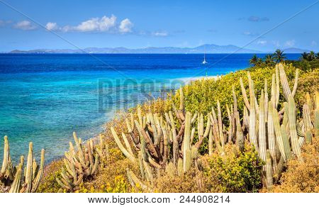Seaside view from a small island in BVI with cacti in the foreground