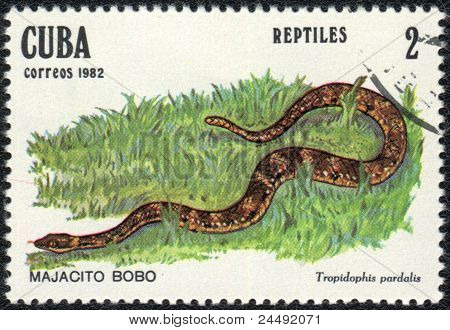 Tropidophis Pardalis
