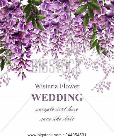 Wedding Invitation Card With Wisteria Flowers Vector. Beautiful Flower Decor. Gorgeous Nature Beauty