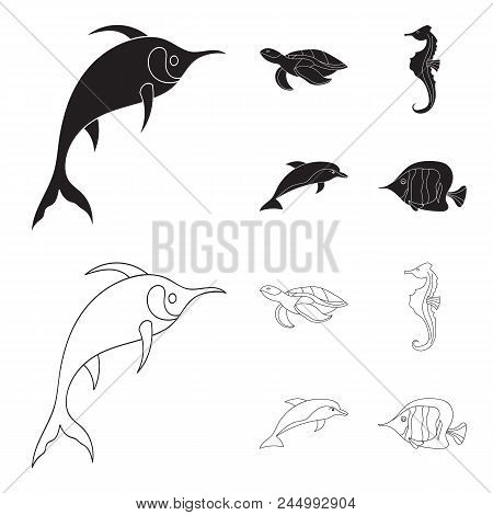 Merlin, Turtle And Other Species.sea Animals Set Collection Icons In Black, Outline Style Vector Sym