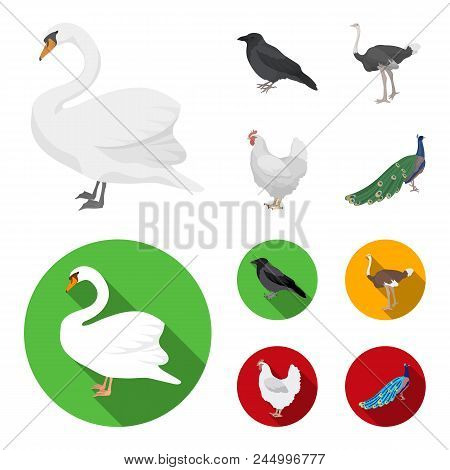 Crow, Ostrich, Chicken, Peacock. Birds Set Collection Icons In Cartoon, Flat Style Vector Symbol Sto