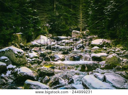 Pine Tree Forest River Flows Through The Rocks. Beautiful Powerful Rapid Steam Of The Mountain River