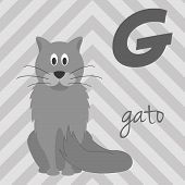 Cute cartoon zoo illustrated alphabet with funny animals. Spanish alphabet: G for Gato. Learn to read. Isolated Vector illustration. poster