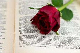 Sonnet 18 With Red Rose Facing
