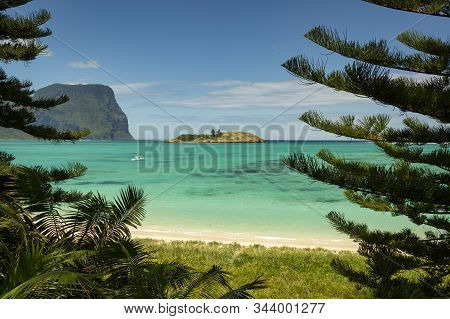 View Of Lord Howe Island Near Lovers Bay Beach Framed By Pine Trees With Pristine Turquoise And Blue