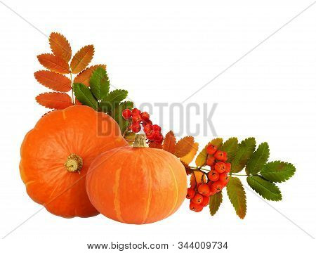 Two Orange Pumpkins, Rowanberries And Autumn Leaves In Corner Arrangement Isolated On White Backgrou