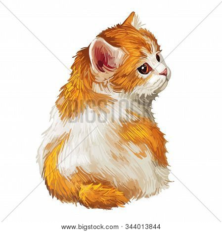 Cymric Or Longhair Manx Cat Isolated On White. Digital Art Illustration Of Hand Drawn Kitty For Web.