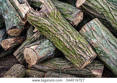 Logs Closeup. Cut A Stack Of Logs Covered With Moss. Stack Firewood. Woodpile Of Chopped Logs Prepar