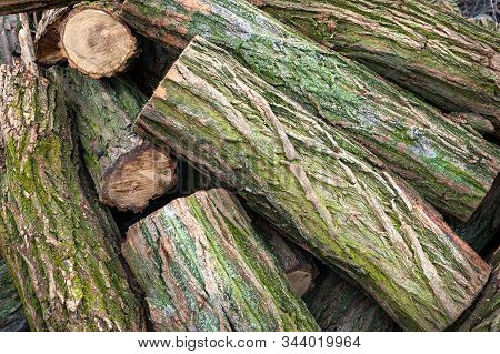 Closeup Logs Covered With Moss. Cut A Stack Of Logs. Stack Of Firewood. Woodpile Of Chopped Logs Pre