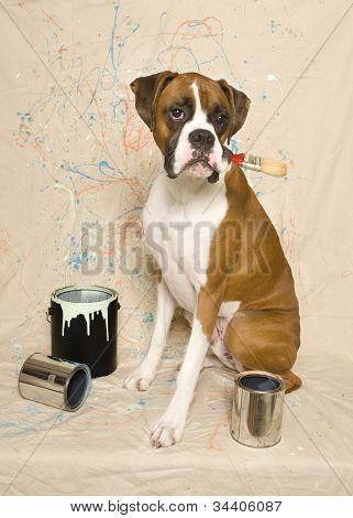 Painter Boxer