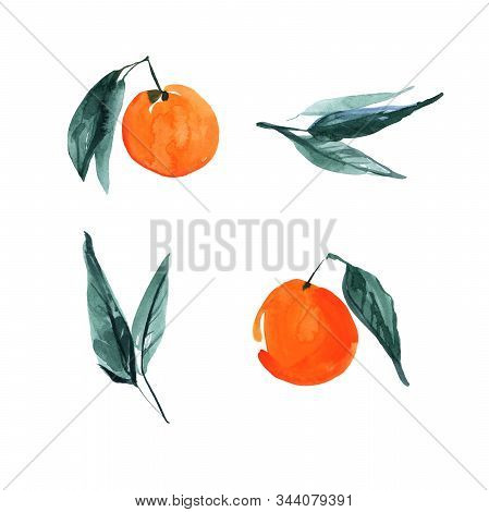 Set Of Hand Drawn Orange Citrus Fruits With Leaves. Sketch Botanical Illustration Painting By Waterc