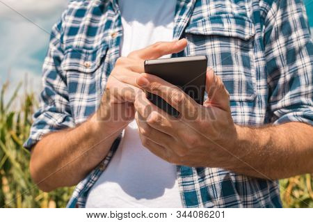 Agronomist Typing Text Message On Smartphone Out In Corn Field On Bright Sunny Summer Day, Using Mod
