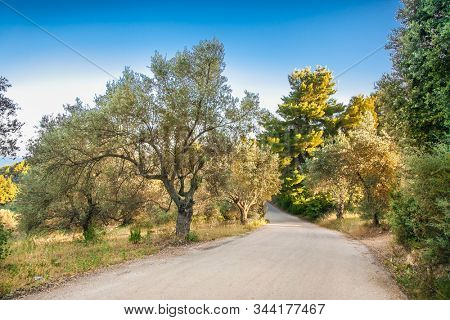 Road over Olive groves at Evia island.  Greece. Europa.