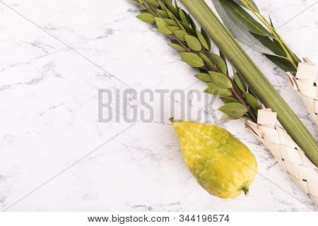 Symbols Of Jewish Sukkot Festival. Banner With Lulav And A Text Space.