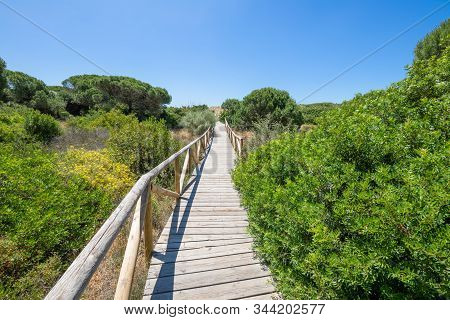 Footbridge With Wooden Planks Between Plants In Trafalgar Cape Natural Park