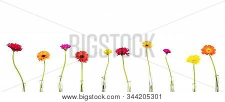 Flowers Gerberas In Vases On White Background, Free Copy Space, Panorama, Isolated