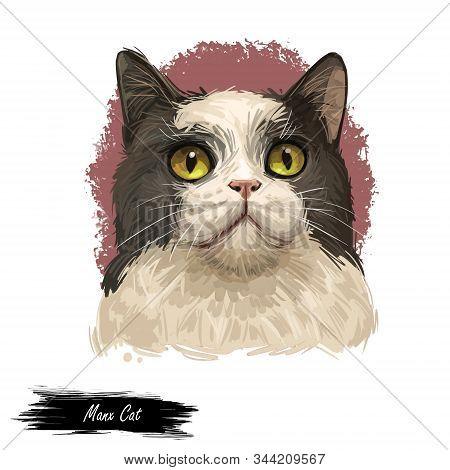 Manx Cat Manks Breed Of Domestic Cat Felis Catus, Short Tail. Stubbin, Rumpy Domesticated Cat Isolat