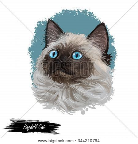 Ragdoll With Thick, Rabbitlike Fur Digital Art Illustration. Ragamuffin Breed Of Domestic Cat Isolat