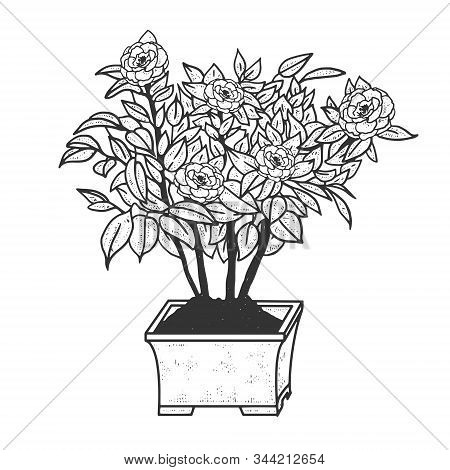 Camellia Plant With Flowers Sketch Engraving Vector Illustration. T-shirt Apparel Print Design. Scra