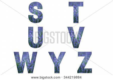 Lavender Font Alphabet S, T, U, V, W, Y, Z Made Of Violet Lavender Field.