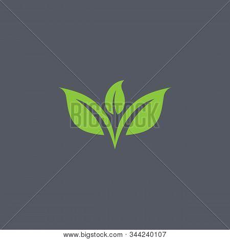 Leaf Logo Design Template Vector Spa & Esthetics