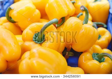 Fresh Raw Organic Yellow Pepper Vegetables For Sale At Farmers Market. Vegan Food And Healthy Nutrit