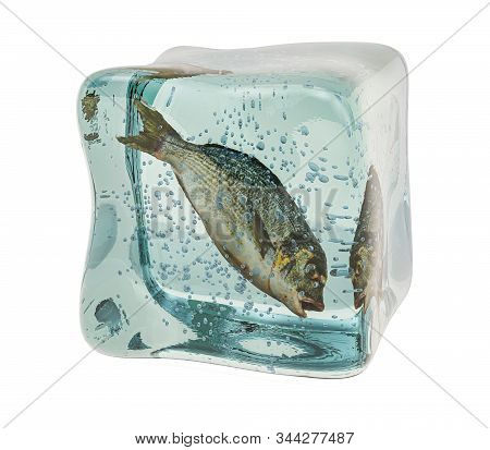 Raw Dorade Fish Frozen In Ice Cube, 3d Rendering Isolated On White Background
