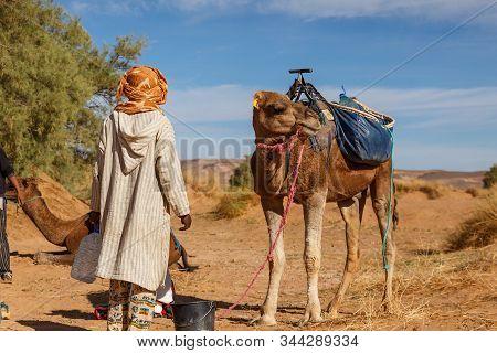 Berber Man In National Dress Stands Near A Camel, Sahara Desert, Morocco, Africa