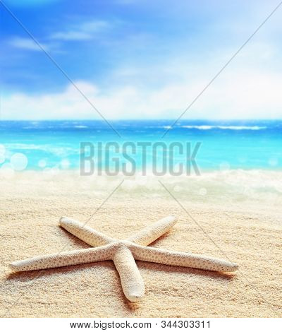 Landscape With Shells On Tropical Beach. Summer Concept