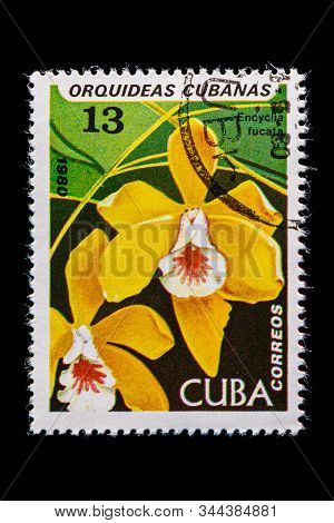 Novosibirsk, Russia - January 07, 2020: Stamp Wild Flowers Collection Printed In Cuba  Shows Yellow