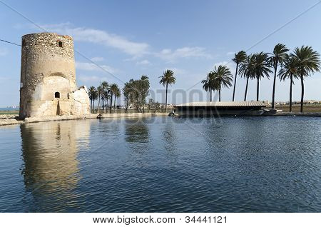 Palm trees and tower