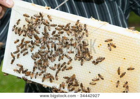 Beekeeper Showing The Top-bar Beehive
