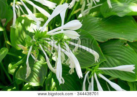 Flowering Plants Hosts, Early Spring Flowering Garden Plants. Garden Plants