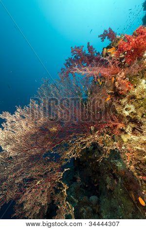 Sea fan in the Red Sea . poster