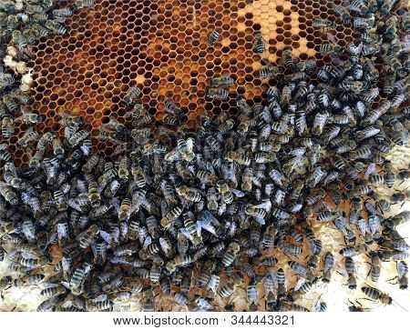 Abstract Hexagon Structure Is Honeycomb From Bee Hive Filled With Golden Honey. Honeycomb Summer Pho