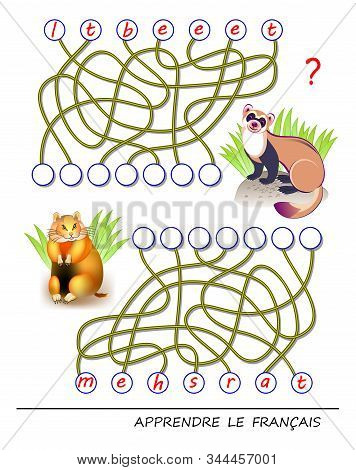 Learn French. Logic Puzzle Game With Cute Animals For Study French Language. Find Correct Places For