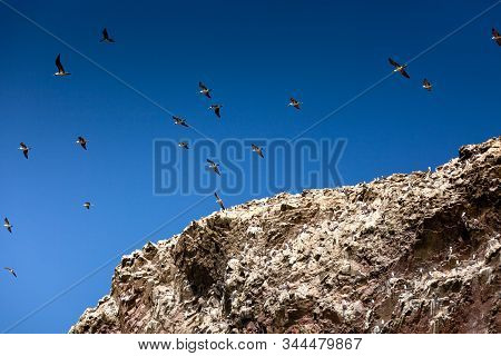 A Flock Of Seagulls In The Blue Sky Above The Rock. Ballestas Islands, Paracas National Reserve, Per