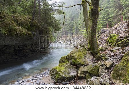 Fast Mountain River Flows In Forest In Gorge Among Rocks And Mossy Stones. River Stiavnica. Janska V