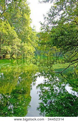Beautiful lake and green trees