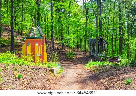 Ecce Homo Chapel In Slavkov Forest, Beech Trees With Green Leaves On Branches In  Thick Dense Foliag
