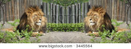 Double Lions