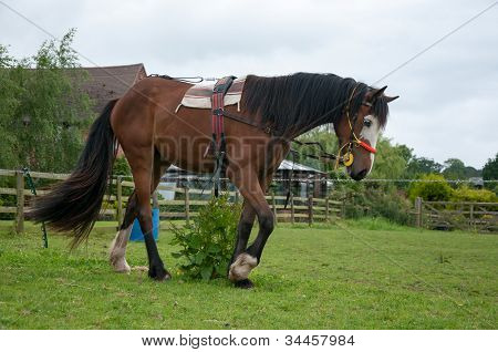Equine education